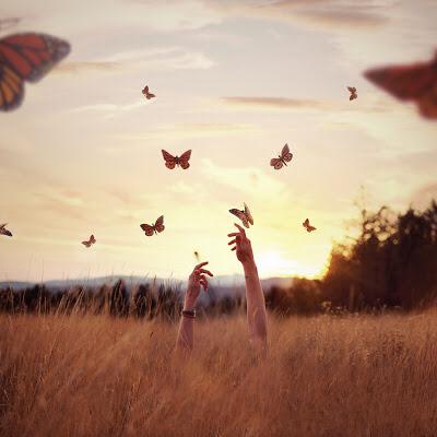No caminho da metamorfose
