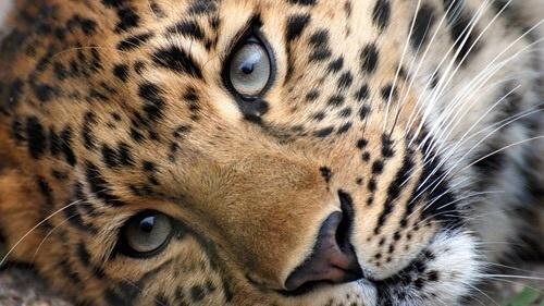 Olhe sua raiva nos olhos